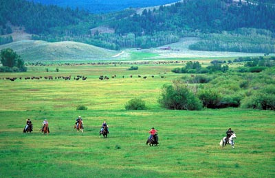 Cantering across a meadow with our neighbor's Buffalo herd in the background